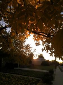 Fall-Piper.1