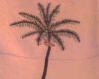 palm-tree - Heather