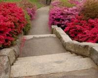 path of choice 3