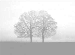 Nic's Tree