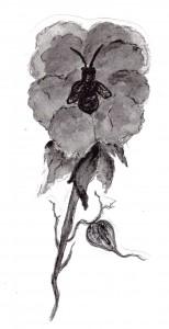 rose bee013
