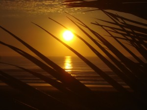 sunset fronds2