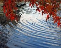 Autumn Ripple