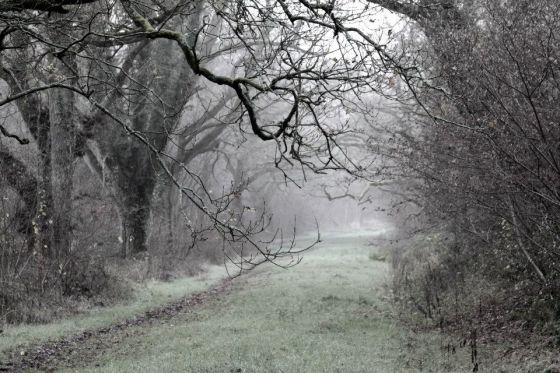 foggy passage