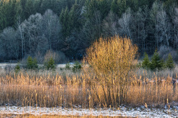 Stripe of Sunlight in Winter Landscape