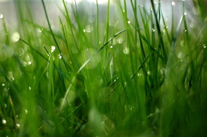 grass droplets