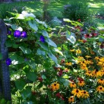 garden-fence-1365809-639x511