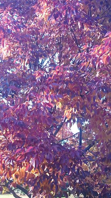 Merlot Leaves