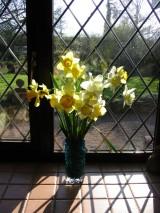 daffodils-1-1484511-639x852