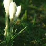 spring-1586269-639x961