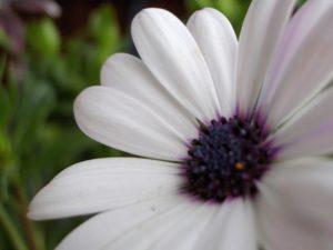 white-flower-2