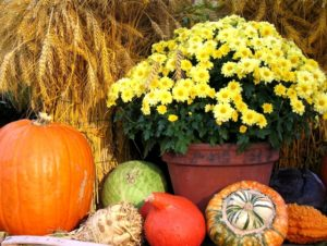 thanksgiving-arrangement-2-1319349-639x480-1
